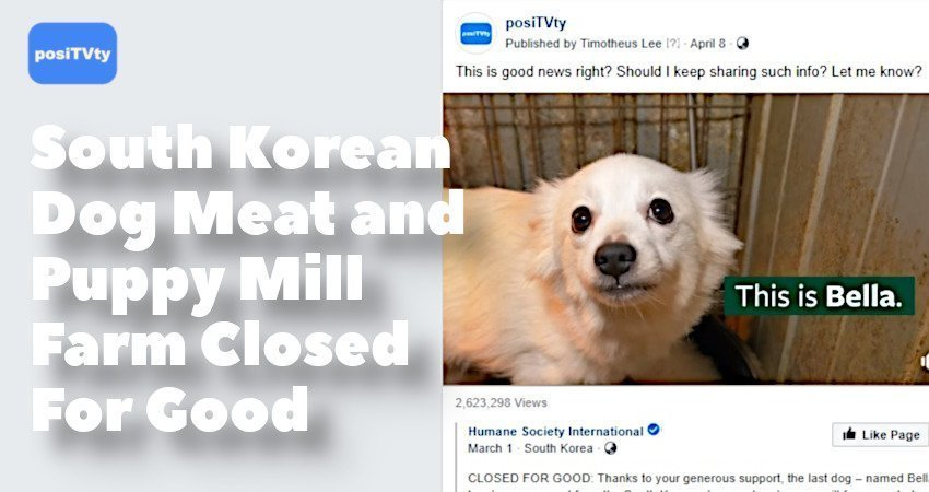 South Korean Dog Meat and Puppy Mill Farm Closed For Good