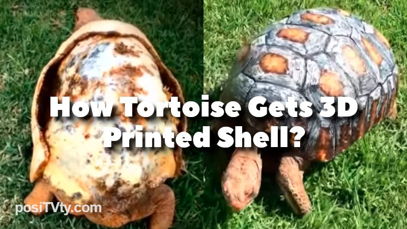 How Tortoise Gets 3D Printed Shell?