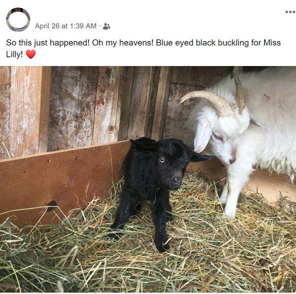 Black Goat Born