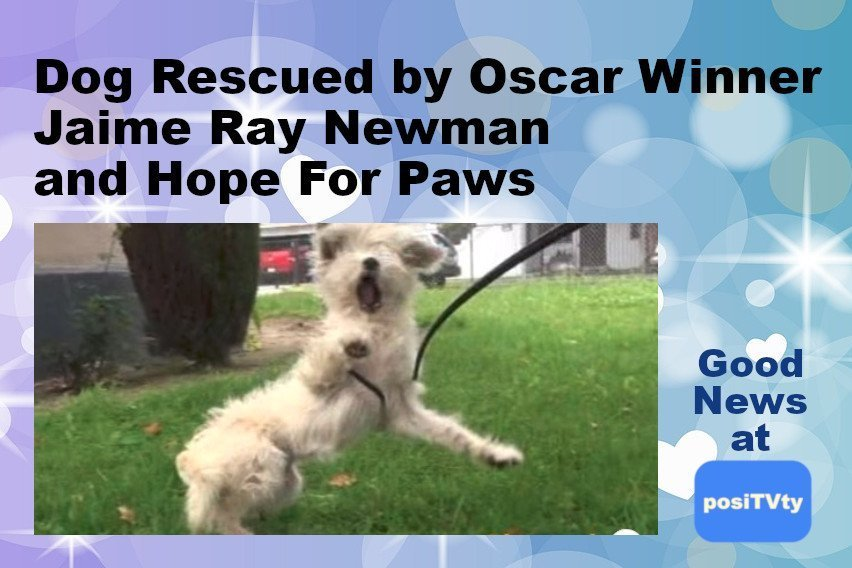 Dog Rescued by Oscar Winner Jaime Ray Newman and Hope For Paws